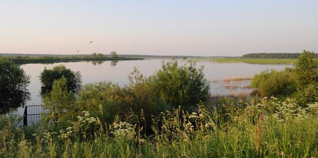 Летний паводок на реке Дубна, июнь 2020 года. Фото О.С.Гринченко