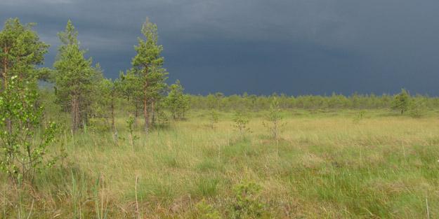 Батьковское болото, Сергиево-Посадский г.о. Фото В.В.Конторщикова