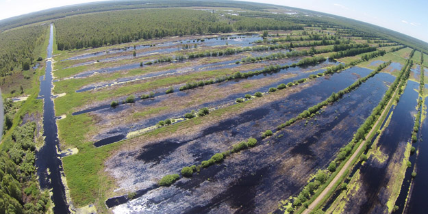 Залитые торфяные поля, июнь 2020 года. Фото А.В.Макарова