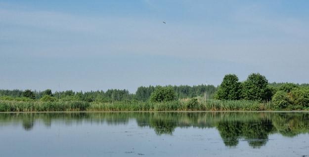 Залитые торфоразработки на месте Ольховского болота. Июнь 2021 г. Фото О.С.Гринченко