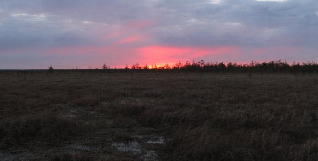 Восход на Батьковском болоте. Московская область. Май 2021 г. Фото В.В.Конторщикова