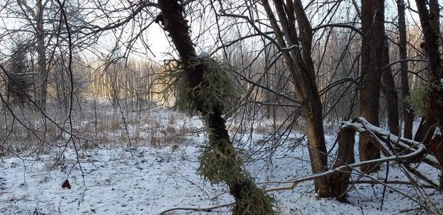 Дятлово болото. Северное Подмосковье. Фото О.С.Гринченко