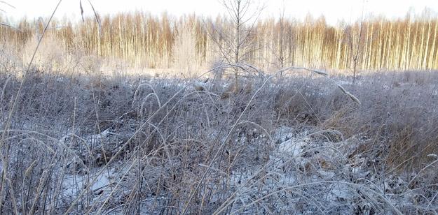 Зимняя поляна. Северное Подмосковье. Фото О.С.Гринченко