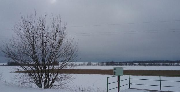 Стайка полевых воробьёв. Фото О.С.Гринченко