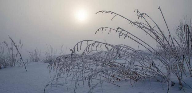 Иней. Фото М.Н.Иванова